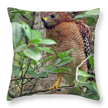 Red-shouldered Hawk Throw Pillow