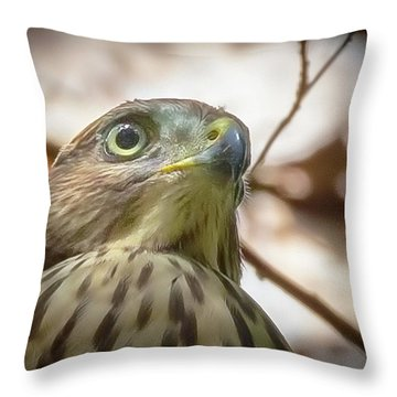 Red-shouldered Hawk Fledgling 3 Throw Pillow