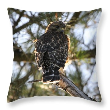 Red Shouldered Hawk Fledgling Throw Pillow