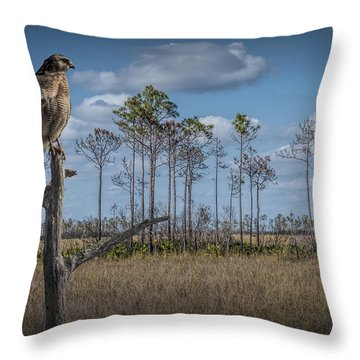 Red Shouldered Hawk In The Florida Everglades Throw Pillow