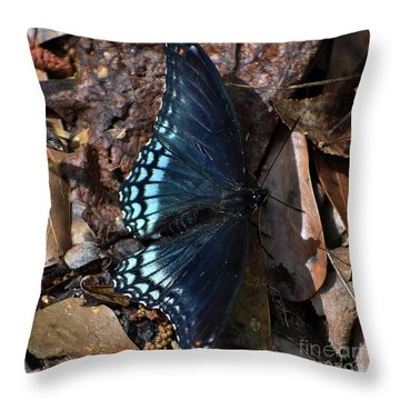 Throw Pillow featuring the photograph Red Spotted Purple Admiral by Skip Willits