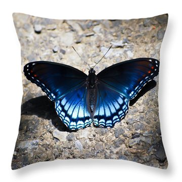 Red-spotted Purple Butterfly Throw Pillow by Kerri Farley