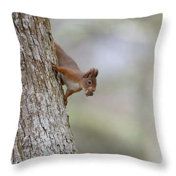 Red Squirrel Climbing Down A Tree Throw Pillow