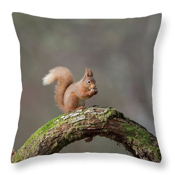 Red Squirrel Eating A Hazelnut Throw Pillow