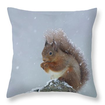 Red Squirrel In A Blizzard Throw Pillow