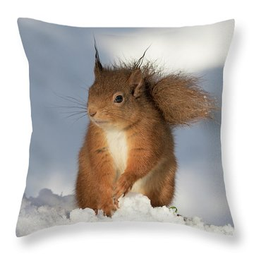Throw Pillow featuring the photograph Red Squirrel In The Snow by Karen Van Der Zijden