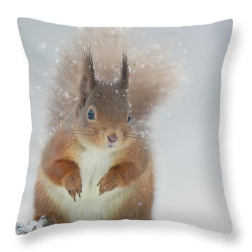 Red Squirrel In Winter Throw Pillow