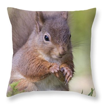 Red Squirrel - Scottish Highlands #1 Throw Pillow