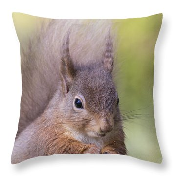 Red Squirrel - Scottish Highlands #1 Throw Pillow