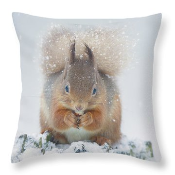 Red Squirrel Nibbles A Nut In The Snow Throw Pillow