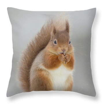 Red Squirrel Nibbling A Hazelnut In The Snow Throw Pillow