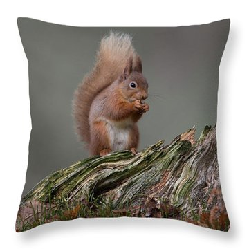 Red Squirrel Nibbling A Nut Throw Pillow