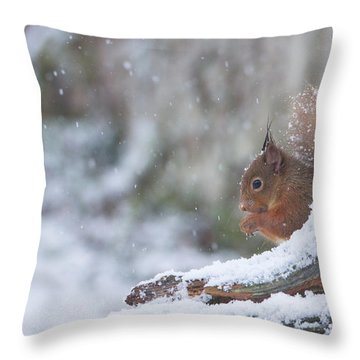 Red Squirrel On Snowy Stump Throw Pillow