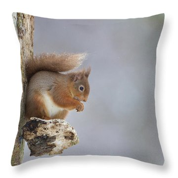Red Squirrel On Tree Fungus Throw Pillow