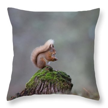 Red Squirrel Peeling A Hazelnut Throw Pillow