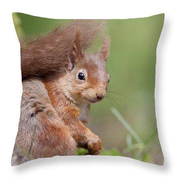 Red Squirrel - Scottish Highlands  #17 Throw Pillow