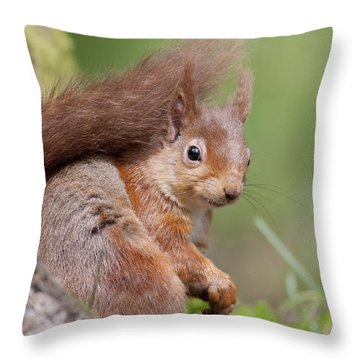 Red Squirrel - Scottish Highlands  #17 Throw Pillow