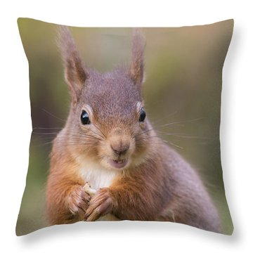 Red Squirrel - Scottish Highlands #18 Throw Pillow