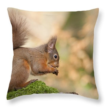 A Moment Of Meditation - Red Squirrel #27 Throw Pillow