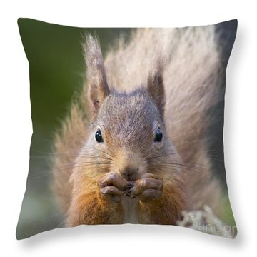 Red Squirrel - Scottish Highlands #28 Throw Pillow