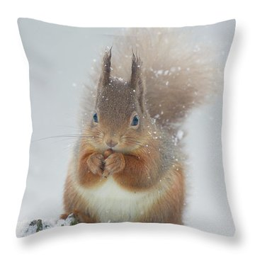 Red Squirrel With Snowflakes Throw Pillow