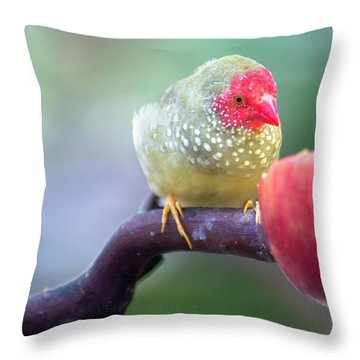 Red Star Finch Throw Pillow