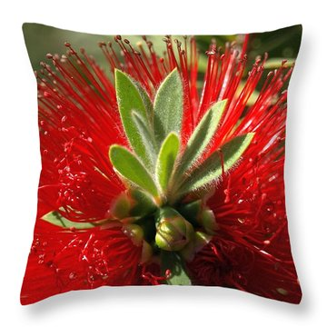 Red Surprise Throw Pillow