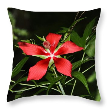 Throw Pillow featuring the photograph Red Swamp Hibiscus by Barbara Bowen