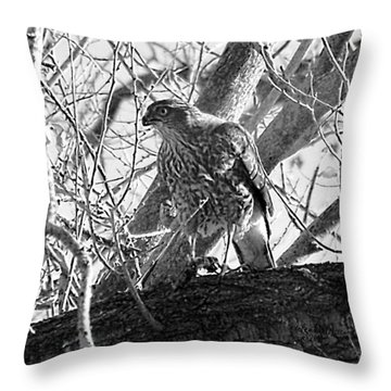Red Tail Hawk In Black And White Throw Pillow