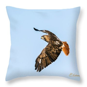 Red-tail Hawk In Flight Throw Pillow