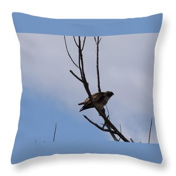 Throw Pillow featuring the photograph Red Tail Hawk Male Tower Rd Denver by Margarethe Binkley