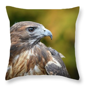 Throw Pillow featuring the photograph Red Tail Hawk by Michael Hubley
