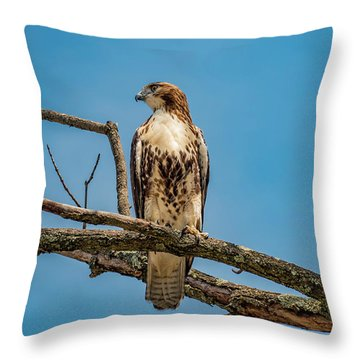 Red Tail Hawk Perched Throw Pillow