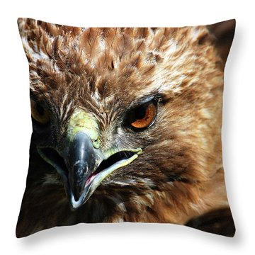 Throw Pillow featuring the photograph Red-tail Hawk Portrait by Anthony Jones