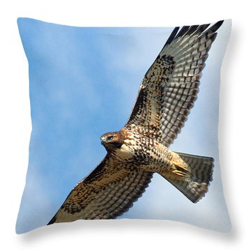Red Tailed Hawk Throw Pillows
