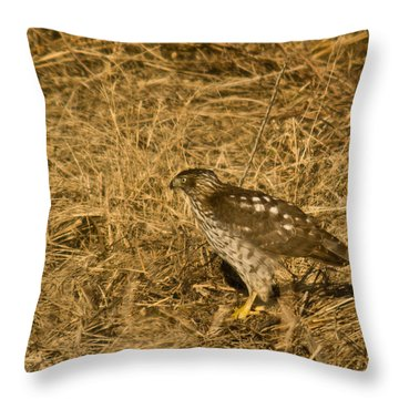 Red Tail Hawk Walking Throw Pillow by Douglas Barnett