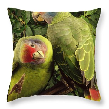 Red-tailed Amazon Amazona Brasiliensis Throw Pillow by Claus Meyer
