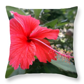 Red-tailed Flower Portrait Throw Pillow