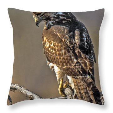 Throw Pillow featuring the photograph Red-tailed Hawk At Cherry Creek by Stephen  Johnson