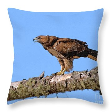 Red-tailed Hawk Throw Pillow by Betty LaRue