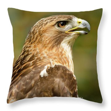 Throw Pillow featuring the photograph Red-tailed Hawk Close-up by Ann Bridges