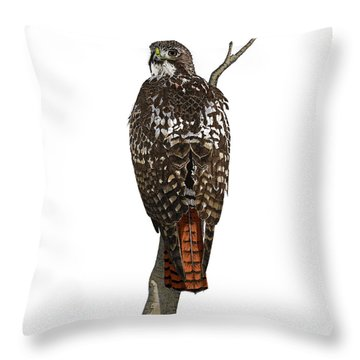 Red-tailed Hawk - Color Throw Pillow