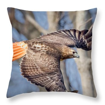 Throw Pillow featuring the photograph Red Tailed Hawk Flying by Bill Wakeley