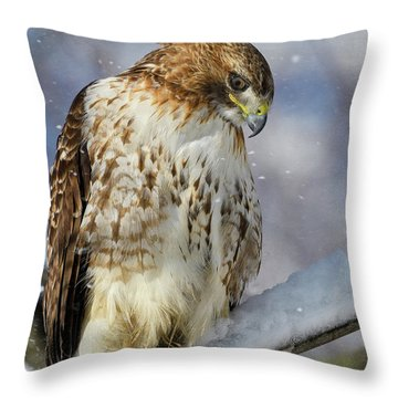 Throw Pillow featuring the photograph Red Tailed Hawk, Glamour Pose by Michael Hubley