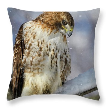 Red Tailed Hawk, Glamour Pose Throw Pillow