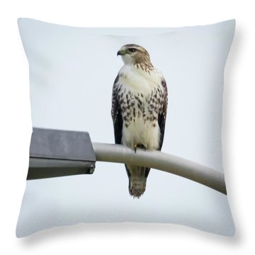 Throw Pillow featuring the photograph Red-tailed Hawk Looking At Me by Ricky L Jones