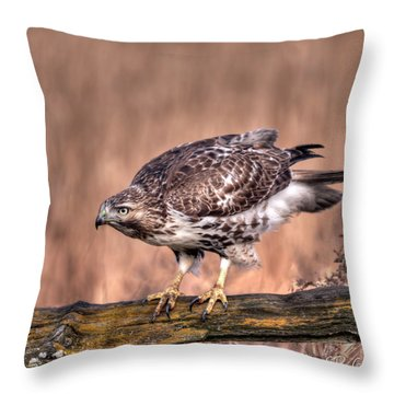 Red-tailed Hawk On A Fence Throw Pillow