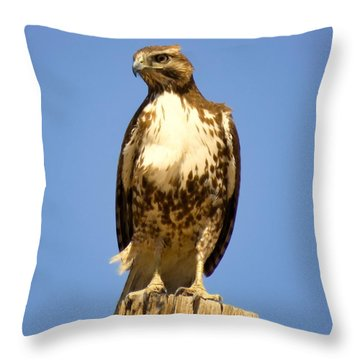 Red-tailed Hawk On Post Throw Pillow