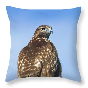 Red-tailed Hawk Perched Looking Back Over Shoulder Throw Pillow
