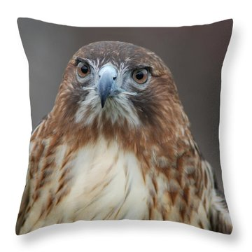 Throw Pillow featuring the photograph Red Tailed Hawk by Richard Bryce and Family